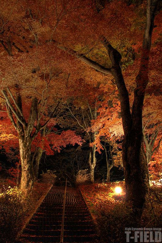 山中湖の紅葉 闇に映えるもみじ