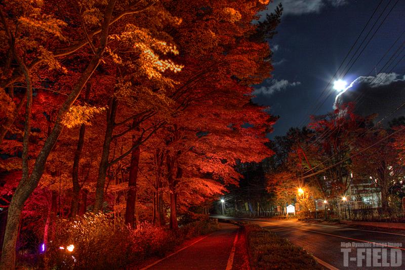 月夜に燃ゆ 山中湖の紅葉