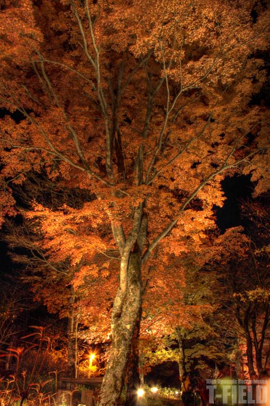 紅葉祭り 山中湖