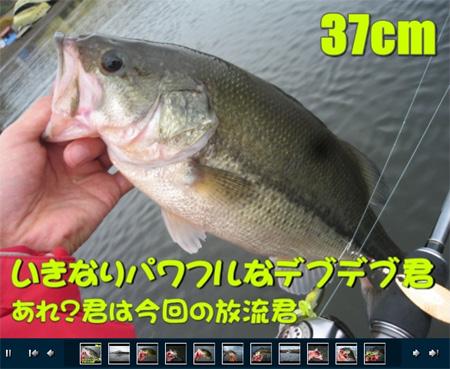 20081103-081103.jpg