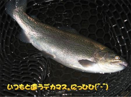 20090118-090118.jpg