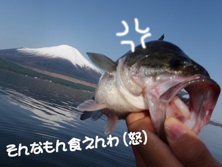 20090510-090509_2.jpg