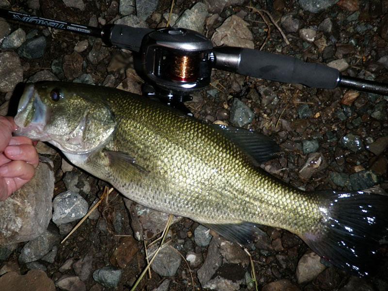 西湖 42cm