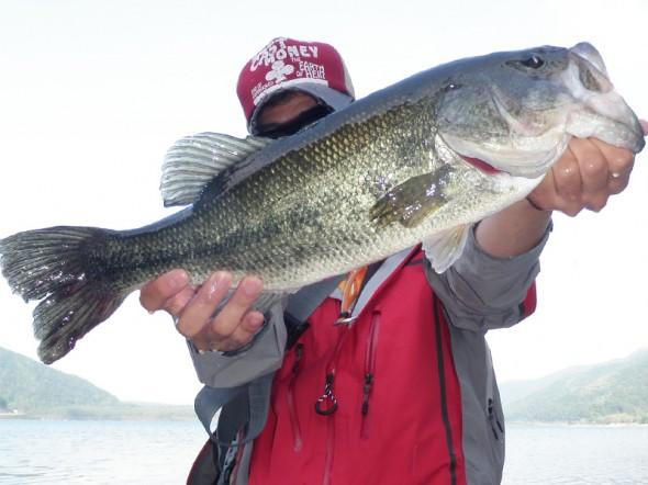 2011年 西湖 最大魚 49cm