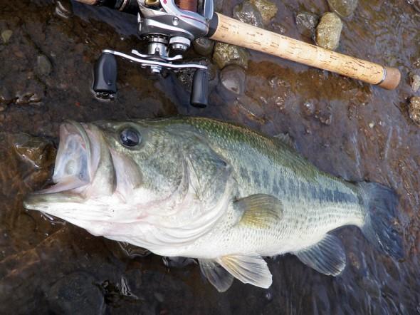 2011年 山中湖 最大魚 48cm