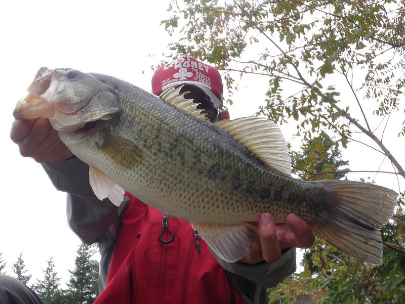 野湖 46cm