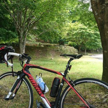 丹沢湖と中川の箒スギ(なかがわのほうきスギ)|ロードバイク