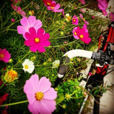 信玄ソフトリベンジ!もっちりカレーパン|ロードバイク