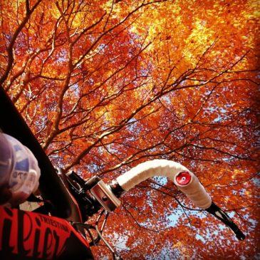 インスタ映え!丹沢湖紅葉ライド|ロードバイク